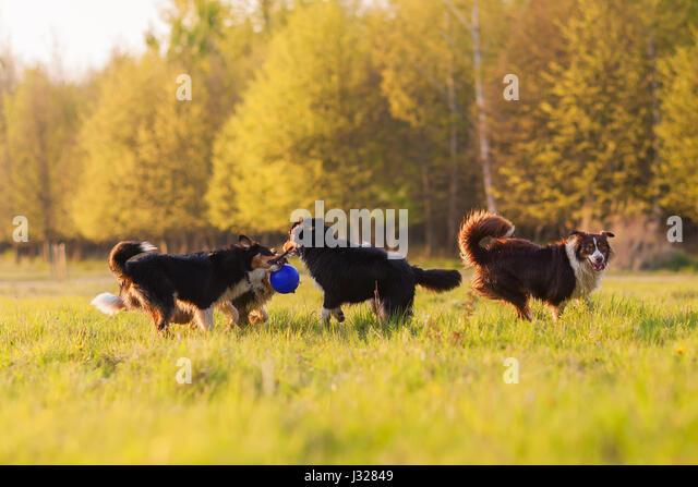 Meadow Pond Farm Jack Russells