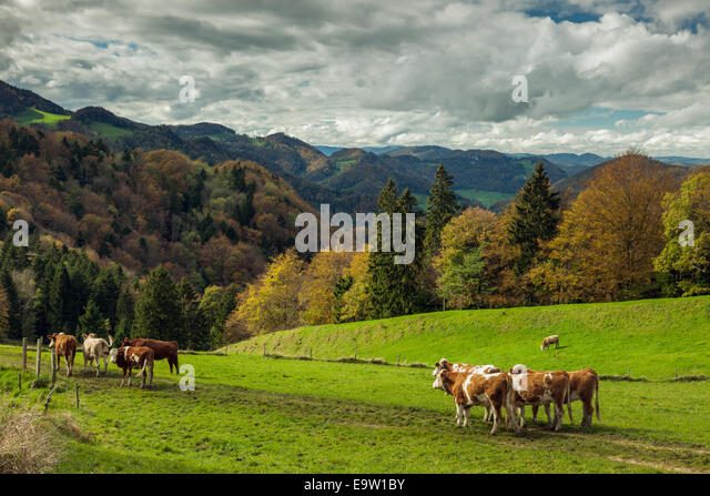 Jura Mountains Switzerland Stock Photos Amp Jura Mountains