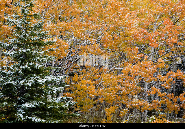 Image result for images of light snow dusting in VT/ colorful leaves on the trees