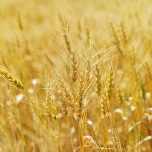 Régime alimentaire sans gluten ; essayez-le contre les crises de colite et de migraine