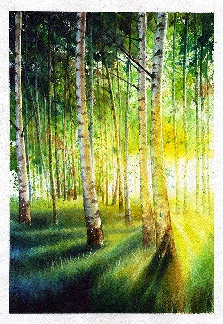 White Birch Baekjunseung Landscape