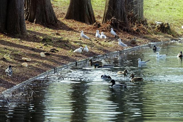 Oiseaux aquatiques - icsilviu / Pixabay