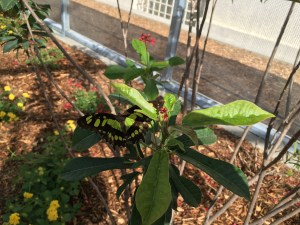 Visiting the New Butterfly Pavilion at Natural History Museum LA