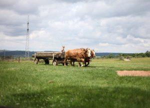 GeneaTheme : des Sosa et des paysans