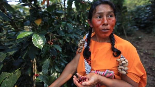 café-Perú