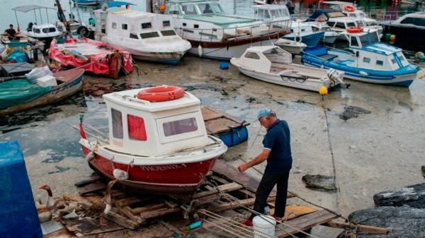 Turquía moco marino medio ambiente