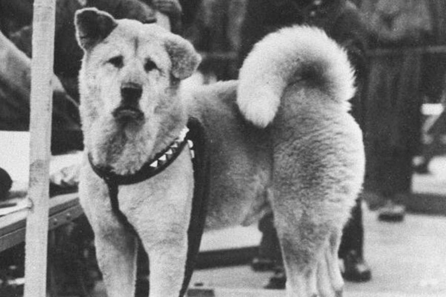 Hoy es el Día del Perro Hachiko