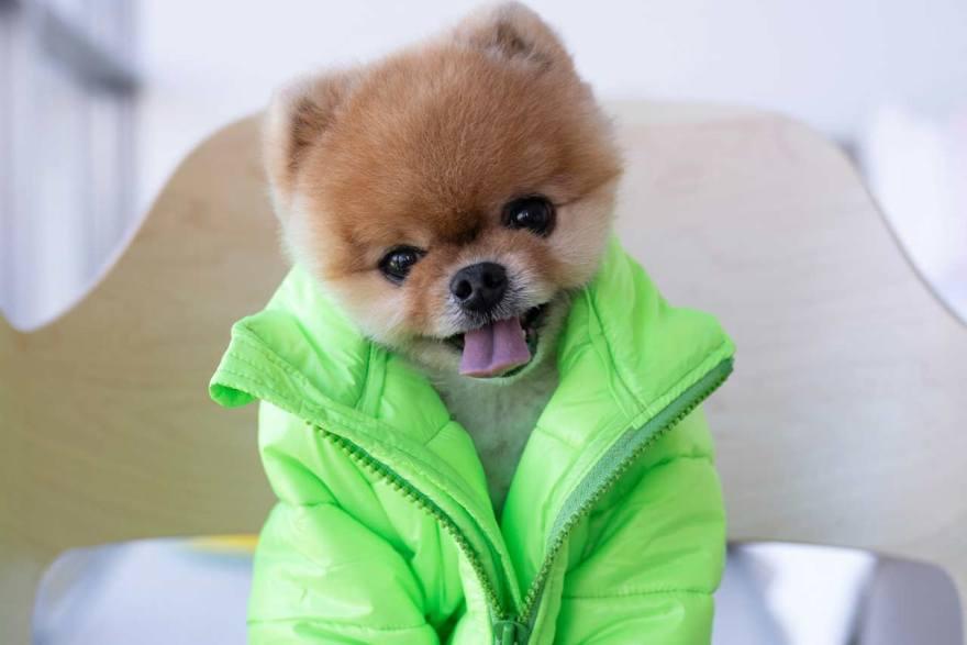 Hoy es el Día del Perro JiffPom