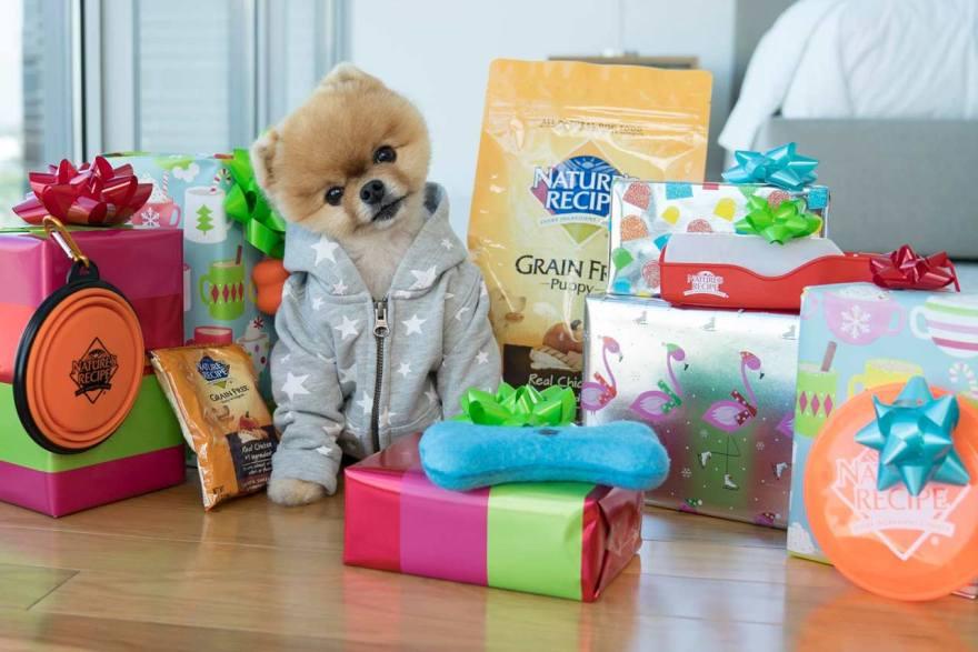 Hoy es el Día del Perro Juf Pom