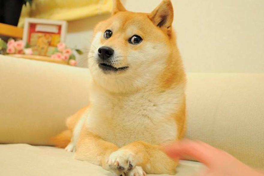 Hoy es el Día del Perro Kabosu