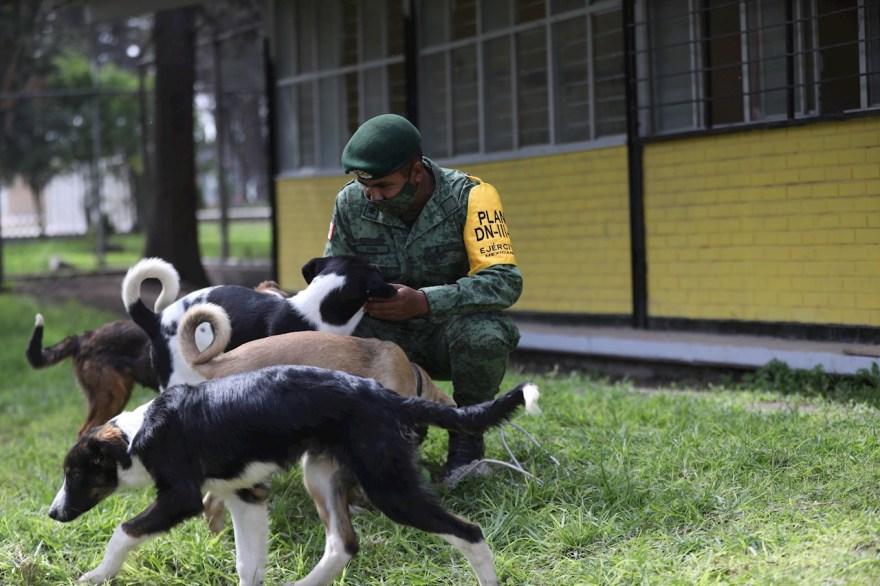 Foto del albergue los perritos de santa lucía