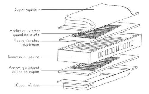 Les différentes parties d'un harmonica démonté