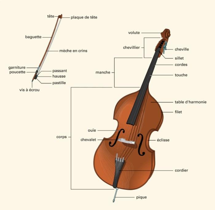 anatomie contrebasse
