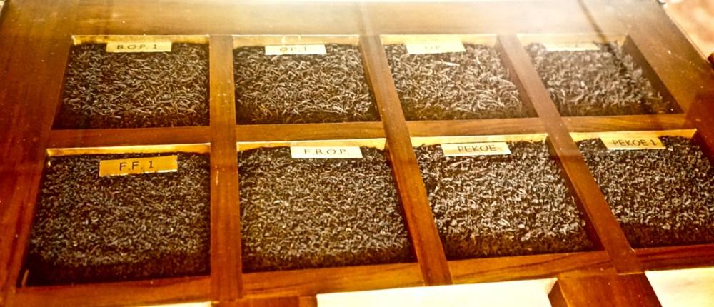 Diverse qualità di tè Sri Lanka