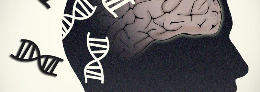 diabète de type 3 -cerveau