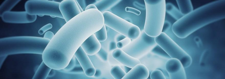le microbiote influence notre comportement - bactéries