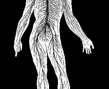 Comment le corps fonctionne-t-il ? - corps