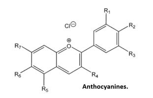 Anthocyanines (Antioxydants anticancer)