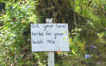 bush-tea