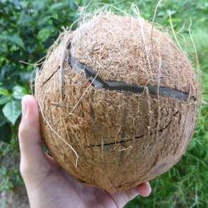 casser-noix-coco