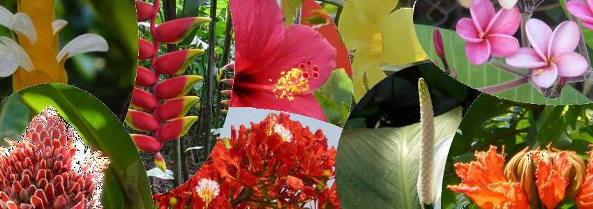 Favorit Reconnaître 14 fleurs de Martinique (noms et photos) OC16