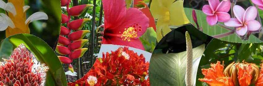 Reconna tre 14 fleurs de martinique noms et photos - Noms de fleurs et plantes ...