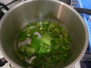 2- Recouvrir d'eau les feuilles de clidemia