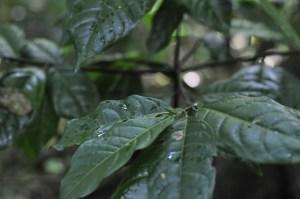 feuilles-bois-lele