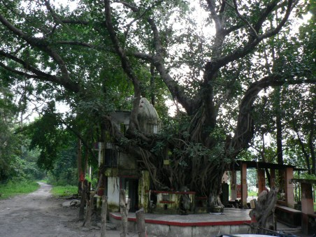 banyan-rajaji-national-park-temple-india