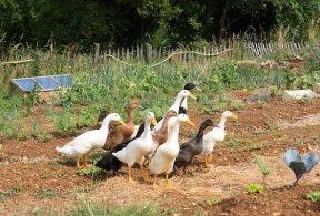 permaculture lyon