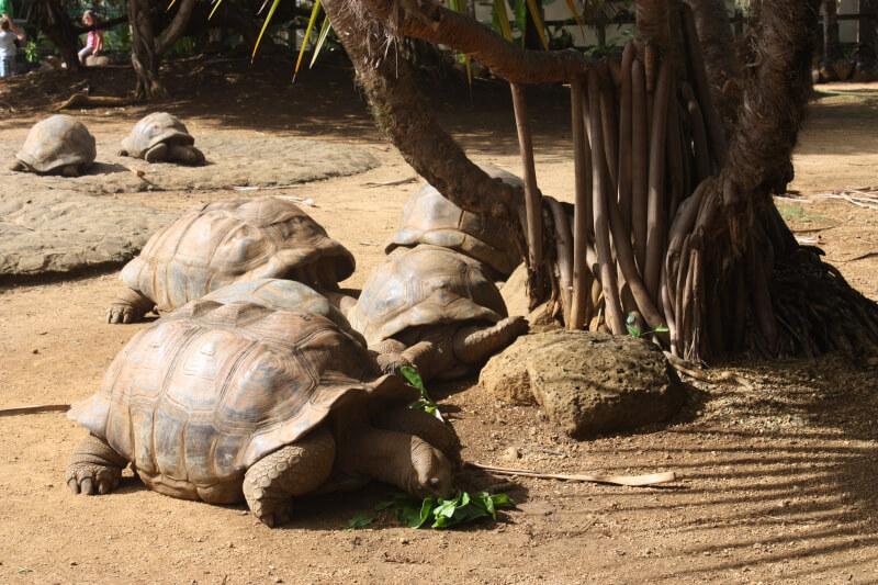 Les tortues du parc la Vanille