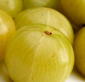 L'Amalaki est un fruit