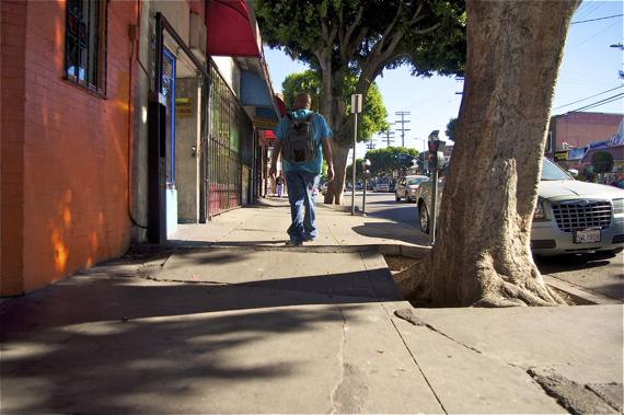 A man summits the mini-mogul created by the ficus along Cesar Chavez. It's hard to tell from the photo, but the the slabs of cement are probably raised between 4 and 6 inches, in a peak that could easily trip up an elderly or disabled person. Sahra Sulaiman/LA Streetsblog
