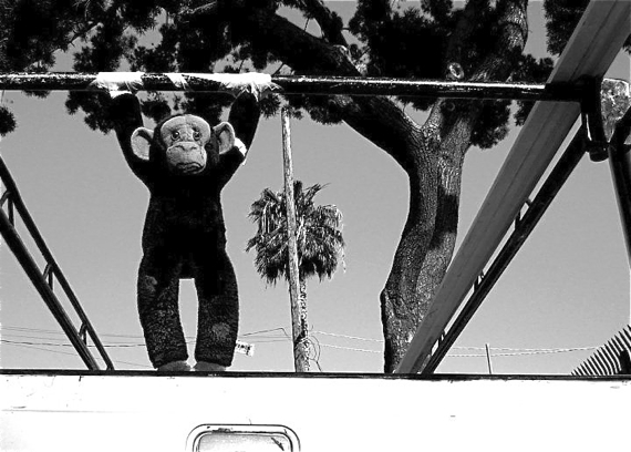 A monkey is tied to the back of a pick-up truck along Venice Blvd. and wears the same expression I do when I am stuck in a car. Sahra Sulaiman/LA Streetsblog