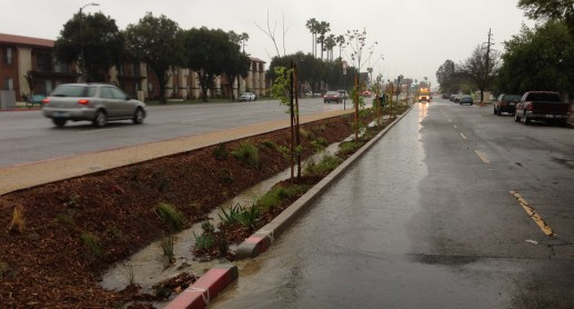 Woodman Avenue median capturing quite a bit of rainwater this morning. photo Joe Linton/LA Streetsblog