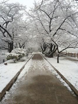 Nagaoka Tenmangu Winter