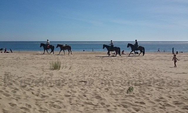 photo paseo-caballo-playa_zpsvvpgs72p.jpg