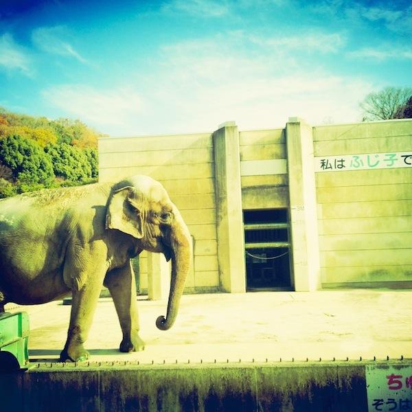 「Touch Retouch」の使い方。象のうんちを消してみた。
