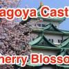 名古屋城と桜を一緒に撮影すると凄く綺麗!iVIS miniで動画も撮りました!