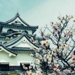 彦根城でひこにゃんに出会ったら…やっぱり可愛かった!桜の季節には少し早かったけど綺麗で楽しめました!