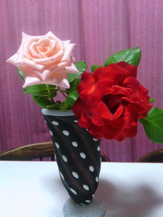 2013-05-28_cut-rose