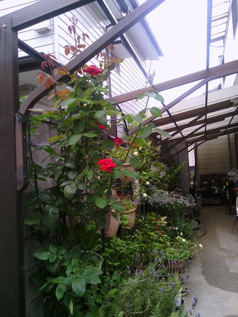 2013-05-29_garage-rose