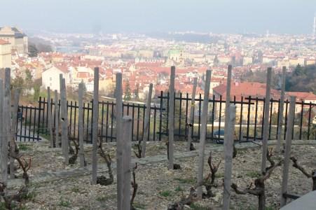 Vignes tchèques