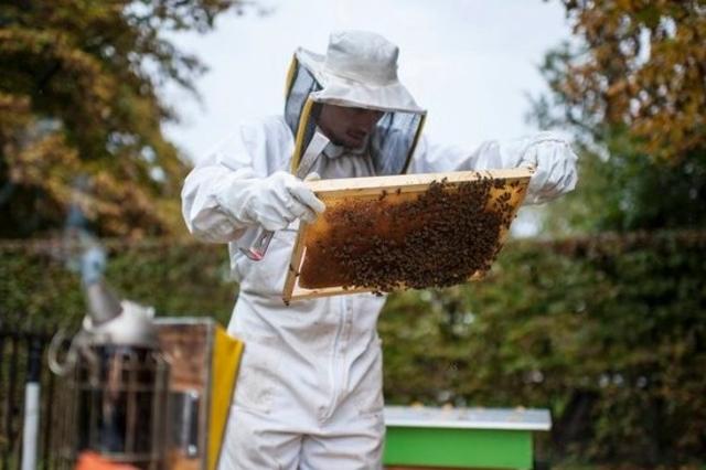 Trois quarts des miels contiennent des pesticides