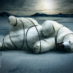 polar-bear-final