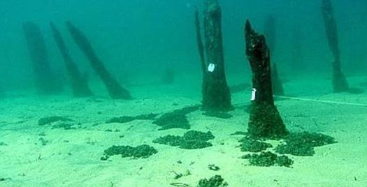 Сваи древнего поселка под водой… (letemps.ch)