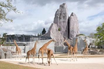 Parc zoologique de Paris (zoo de Vincennes) - 08/04/2014