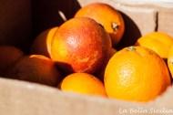 Czerwone pomarańcze moro