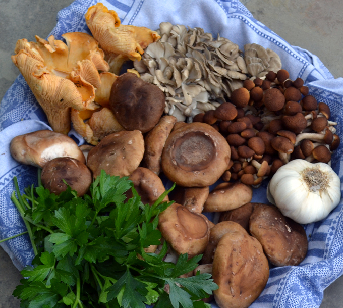 Assorted Wild Mushrooms | labellasorella.com
