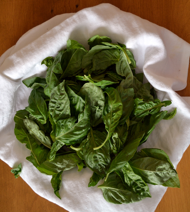 Freshly picked basil leaves to prepare the basil paste for Summer Vegetable Soup | labellasorella.com